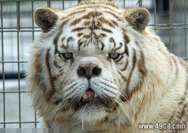世界最丑的十大动物